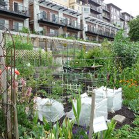 Urban farming in Seattle